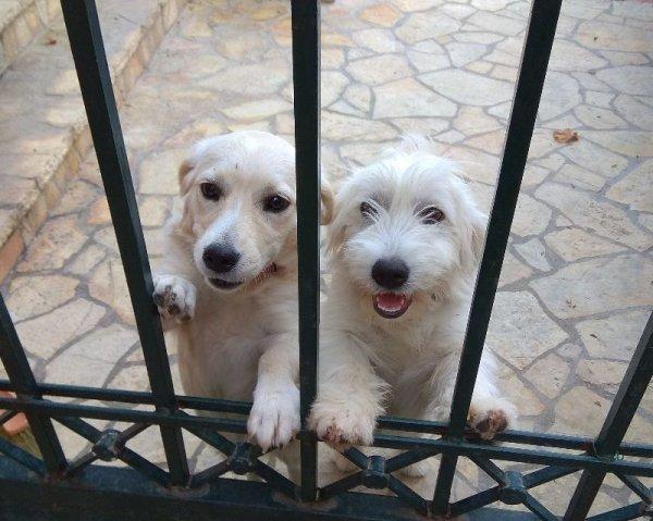 Χαρίζονται σκυλάκια
