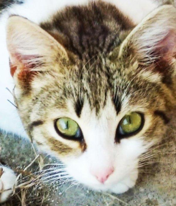 Χαρίζεται αρσενικό γατάκι