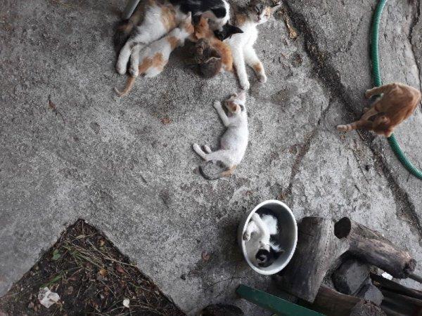Χαρίζονται γατάκια