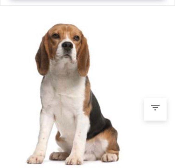 Ζητείται σκυλάκι