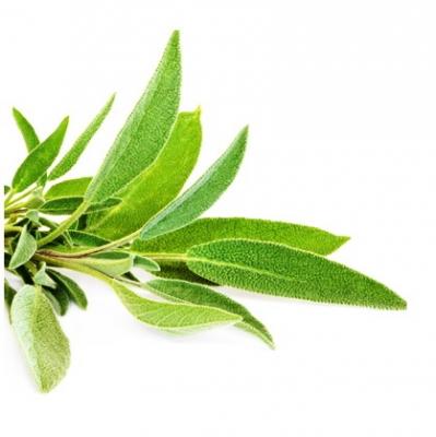 Φασκόμηλο: το «ελληνικό βραστάρι» καλύτερο από το τσάι κατά τους Κινέζους