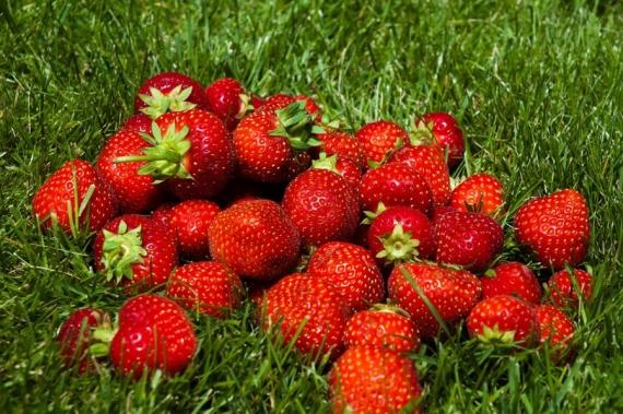 Μεθυσμένες μικρές φράουλες Κέρκυρας